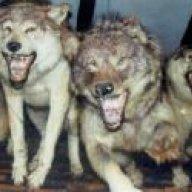 daggerwolf